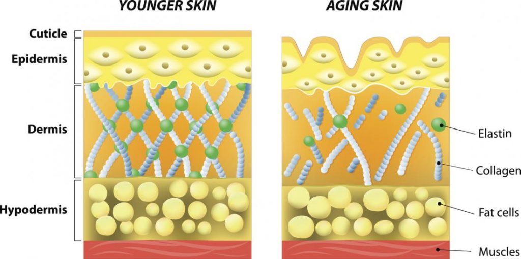 Image of aging sking and younger skin-vitamin for skin